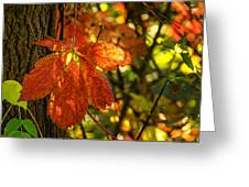 Autumn Begins 2 Greeting Card