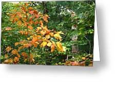 Autumn Begins At Breakheart Reservation Greeting Card
