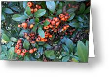 Autumn Berries In Michigan Greeting Card