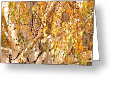 Autumn Birch Leaves Greeting Card