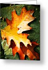 Autumn Blaze Greeting Card by JAMART Photography