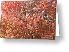 Autumn Blaze Greeting Card