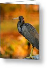 Autumn Blue Heron Greeting Card