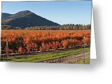 Autumn Blueberry Panorama Greeting Card
