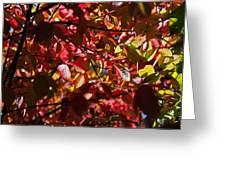 Autumn Breeze Greeting Card
