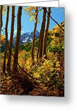 Autumn Brilliance 2 Greeting Card