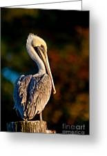Autumn Brown Pelican Greeting Card