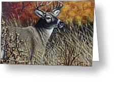 Autumn Buck Greeting Card