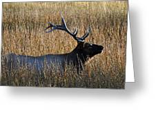 Autumn Bull Elk In Yellowstone National Park Greeting Card