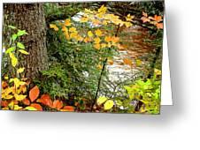 Autumn By A Pennsylvania Mountain Stream Digital Art Greeting Card