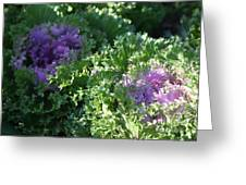 Autumn Cabbage Greeting Card