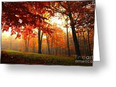 Autumn Canopy Greeting Card by Terri Gostola