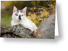 Autumn Cat Greeting Card