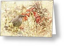 Autumn Catbird Greeting Card