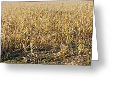 Autumn Cattle Silage Corn In Maine Greeting Card by Keith Webber Jr