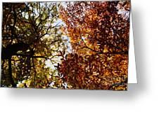 Autumn Chestnut Canopy   Greeting Card