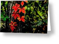 Autumn Climber Greeting Card