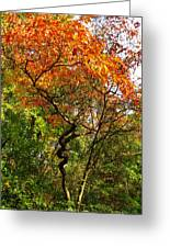Autumn Color At Old Woman Creek 2 Greeting Card