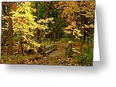 Autumn Color Greeting Card by Cole Black