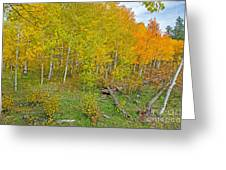 Autumn Color Greeting Card by Baywest Imaging