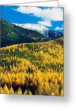 Autumn Color Larch Trees In Pine Tree Greeting Card