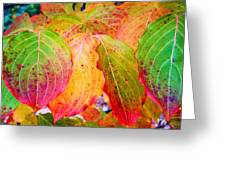 Autumn Colored Leaves Greeting Card