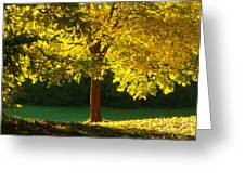 Autumn Colors 10 Greeting Card