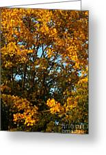 Autumn Colors 11 Greeting Card