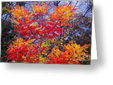 Autumn Colors - 113 Greeting Card