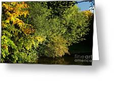 Autumn Colors 3 Greeting Card