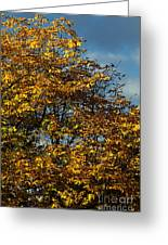 Autumn Colors 5 Greeting Card