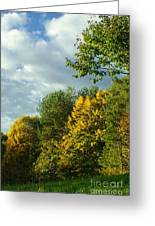 Autumn Colors 6 Greeting Card