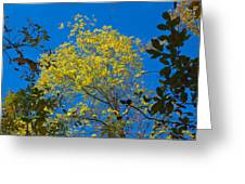 Autumn Colors Against The Sky Greeting Card
