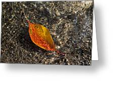 Autumn Colors And Playful Sunlight Patterns - Cherry Leaf Greeting Card