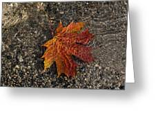 Autumn Colors And Playful Sunlight Patterns - Maple Leaf Greeting Card