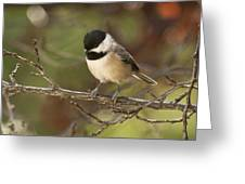 Autumn Colors Chickadee Greeting Card