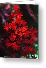 Autumn Colors Early Greeting Card