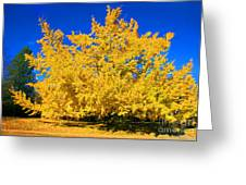 Autumn Colors Gingko Tree  Greeting Card