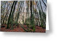 Autumn Colors In The Forrest Greeting Card