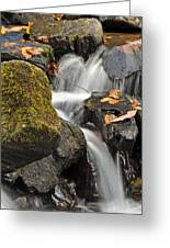 Autumn Colors On Big Crabtree Creek Greeting Card