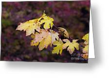 Autumn Contrast Greeting Card