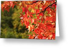 Autumn Cornered Greeting Card