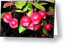 Autumn Crab Apples Greeting Card