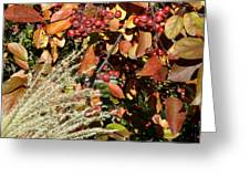 Autumn Crabapples And Tall Grass Greeting Card
