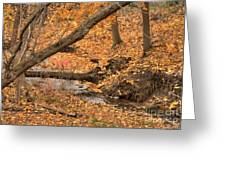Autumn Creekbed Greeting Card