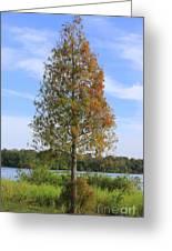 Autumn Cypress Tree Greeting Card
