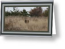 Autumn Deer Greeting Card