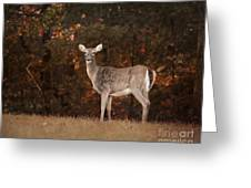 Autumn Doe Greeting Card