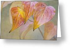 Autumn Dogwood Greeting Card