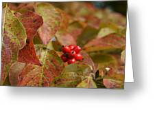 Autumn Dogwood Berries Greeting Card